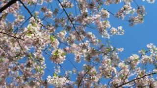 Blossom Botanical Sky