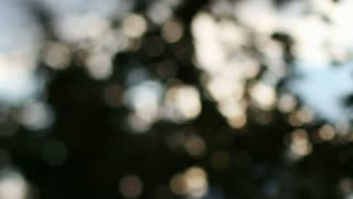 Blurry Sunlight Through Trees