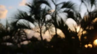 Blurry Sunset Tropics