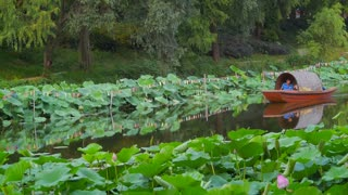Boat Floating Down Lotus Lake
