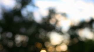 Bokeh Sunlight Through Trees