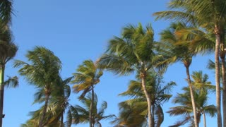 Breezy Palm Trees
