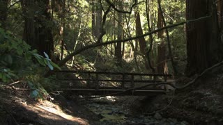 Bridge Across Creek in Forest