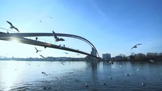 bridge landscape. swarm of birds flying. lake pond water. slow motion