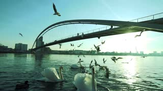 bridge panorama landscape. swarm seagull birds. lake pond water. slow motion