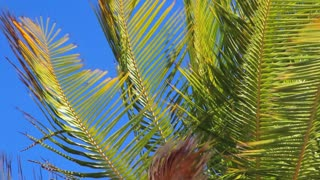 Bright Sun On Palm Tree Leaves