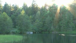 Bright Sun Over Wetlands