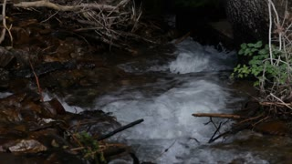 Bubbling Stream Flowing Through Forest Floor