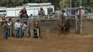Calf Roping In Country