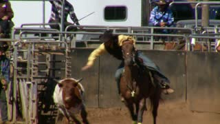 Calf Slipping Away From Cowboy