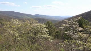Calm Breeze Across Blue Ridge Mountain Landscape