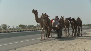 Camels Pulling Cart in Rajasthan