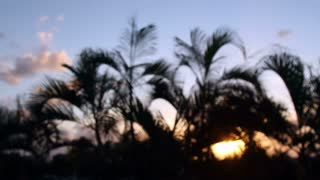 Cancun Sunset Palm Trees