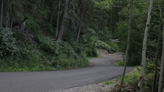 Car Driving WInding Road Through Woods