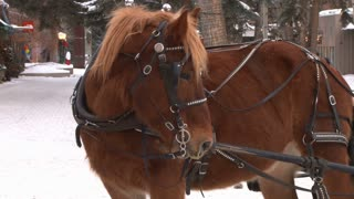 Carriage Horse Breathing