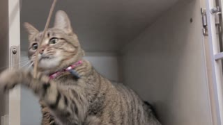 Cat In Animal Shelter Playing