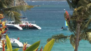 Catamarans through Tropical Plants 3