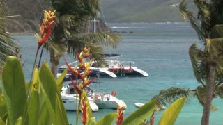 Catamarans through Tropical Plants