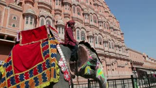 Ceremonial decorated Elephant outside the Hawa Mahal, Palace of the Winds, built in 1799, Rajasthan, Jaipur, India, Asia