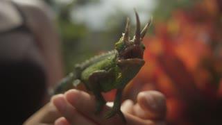 Chameleon Sensing Its Surroundings