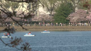 Cherry Blossoms and people in boats 4