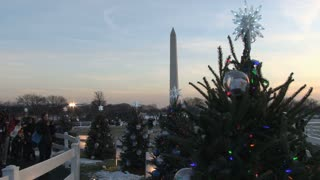 Christmas Trees and the Washington Monument