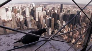 cityscape skyline birds