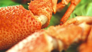 Close panoramic shot of claw of crayfish or lobster lying on the tray with green lettuce of salad