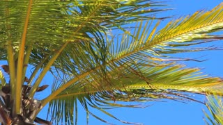 Close Puerto Rico Palm Tree