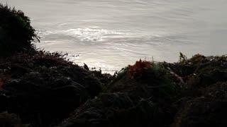 Close Shot Of Ocean And Tidepool