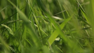 Close up and pan left on grass
