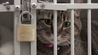 Close Up Cat In Locked Cage
