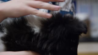Close up of nurse at veterinary clinic petting a young sheltie dog