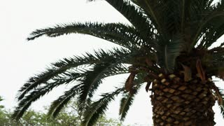 Close Up Of Palm Tree