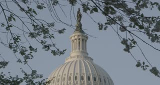close up of the Capitol dome through leaves, Washington DC