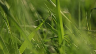Close up on grass