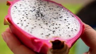 Closeup of Eating Fresh Dragon Fruit for Dessert.