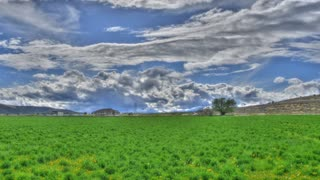 Clouds Field Panning 1080