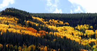 Clouds float over a forest of pine and Aspen trees in autumn with fall foliage