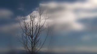Clouds Moving Past Lone Tree