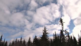 Clouds Sweeping Over Tree Tops