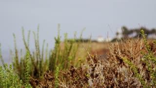 Coastal Lighthouse Rack Focus