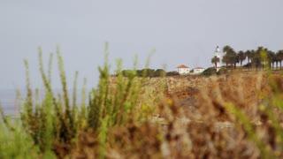 Coastal Plantlife