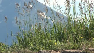 Colorado Grass with Mountain Backdrop 2