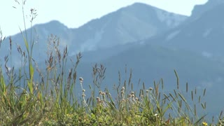 Colorado Grass with Mountain Backdrop 3