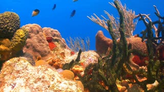 Colorful Seabed Coral Reef
