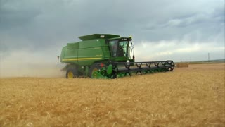 Combine Harvests Wheat In Field