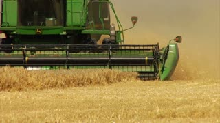 Combine Harvests Wheat Slow-motion