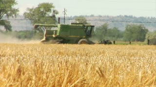 Combine Harvests Wheat With Heat Waves