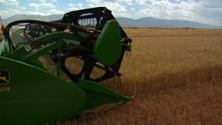 Combine Harvests Wheat